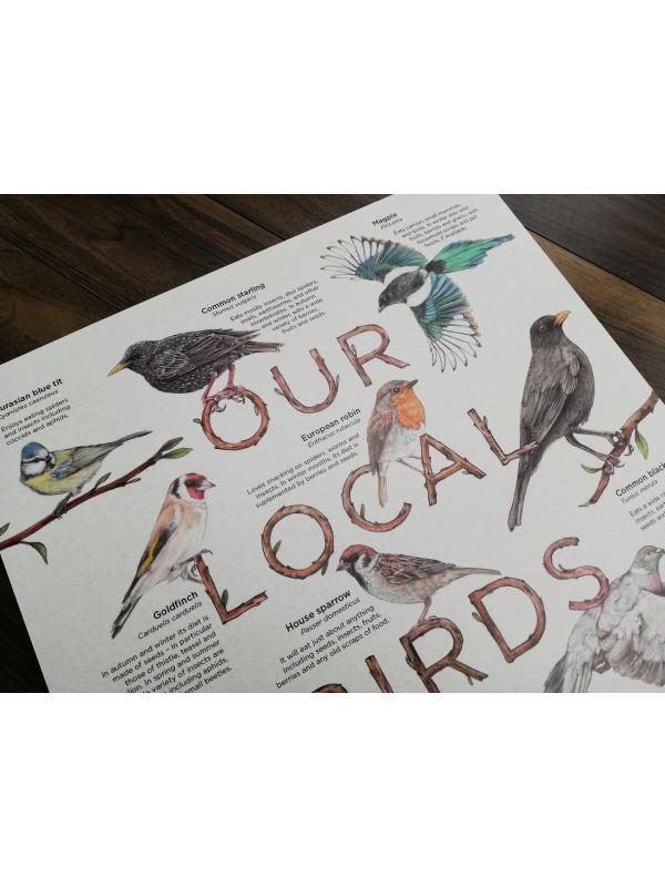 Info board featuring a selection of Europeanbirds – artwork by Aga Grandowicz