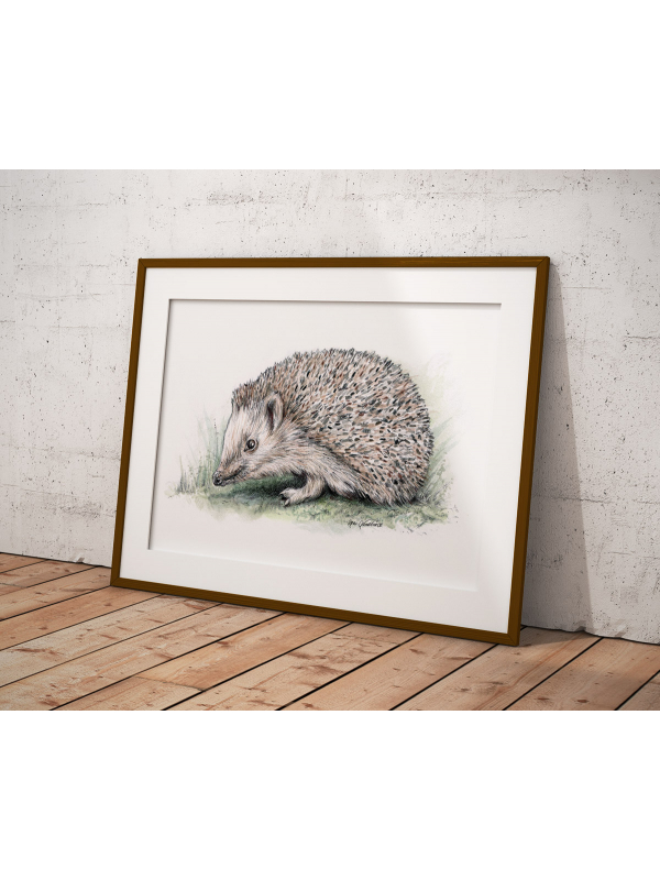 Hedgehog, A4 fine art prints by Aga Grandowicz.