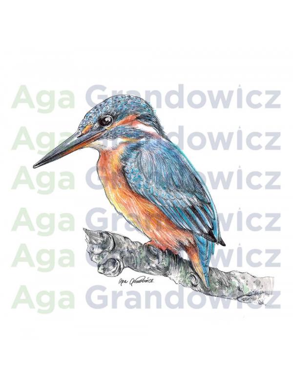 Kingfisher #1 – original artwork by Aga Grandowicz – close-up