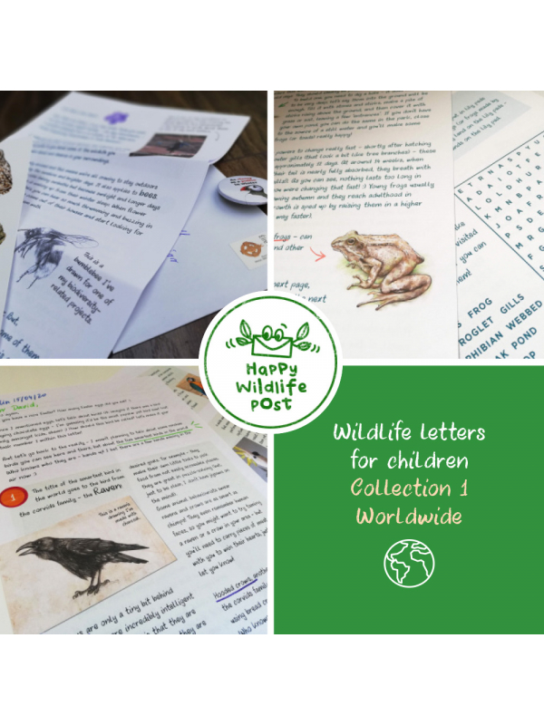 Wildlife letters for children by Aga Grandowicz | Happy Wildlife Post