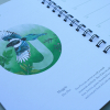 European-Birds-Diary-by-Aga-Grandowicz_July_Magpie