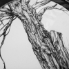 Trees of Marlay Park #4, A4 fine art print from a drawing by Aga Grandowicz