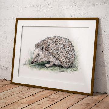 European hedgehog – original artwork by Aga Grandowicz.