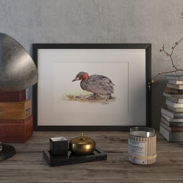 Little grebe duck – original artwork by Aga Grandowicz.