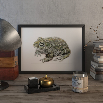 Natterjack toad – original artwork by Aga Grandowicz