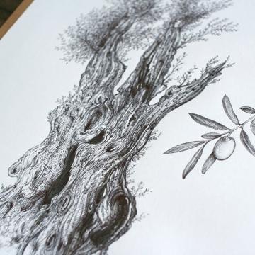 Olive tree – original artwork by Aga Grandowicz_img2.