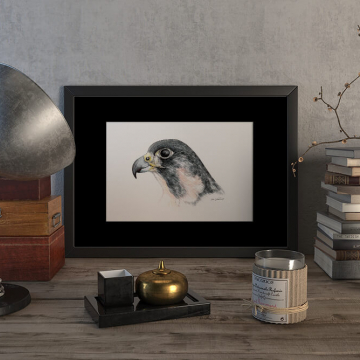 Peregrine falcon #2 – original artwork by Aga Grandowicz