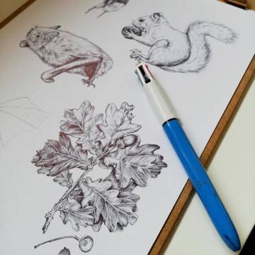 Irish wildlife – illustrations for an information board