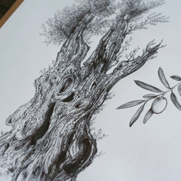 Drawings of olive trees