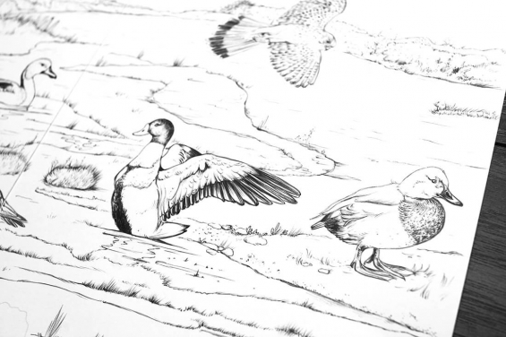 Birds drawings by Aga Grandowicz, photo 1