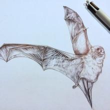 bat3_w900.jpg