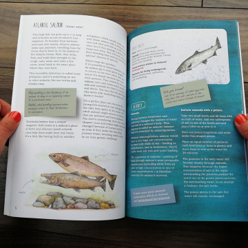 Remarkable Creatures: a guide to some of Ireland's disappearing animals, book by Aga Grandowicz_3