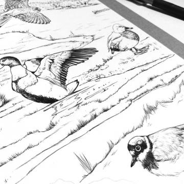 Birds drawings by Aga Grandowicz, photo 2