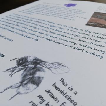 Wildlife letters for children – LETTER 1 – Bees – Worldwide