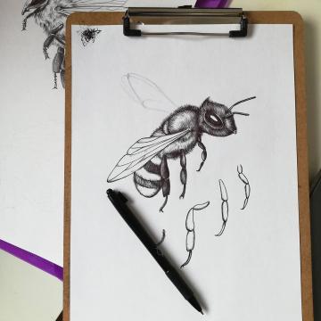 Tullamore D.E.W Honey_bee_label illustration by Aga Grandowicz