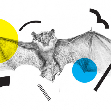 Drawing of a bat by Aga Grandowicz