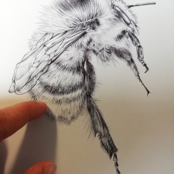 Bee art by Aga Grandowicz.jpg
