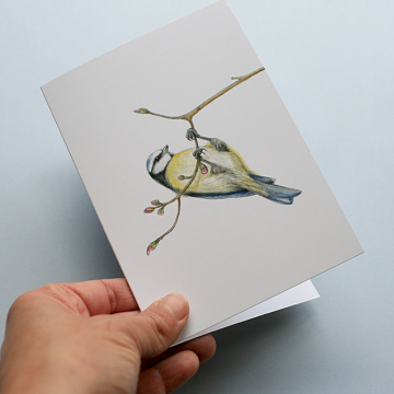 A6 CARD –blue tit hanging from a tree branch