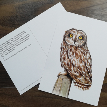 A5 CARD – Short-eared owl