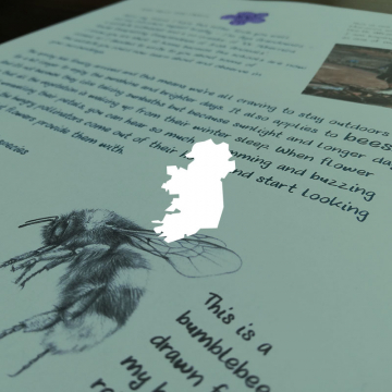 Wildlife letters for children – LETTER 1 – Bees – Ireland only