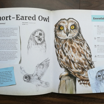 Short-eared owl spread from Dr Hibernica Finch's Compelling Compendium of Irish Animals