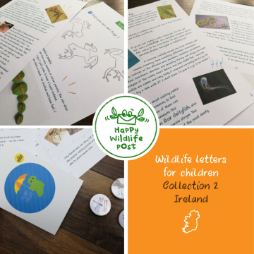 Three wildlife letters for children – COLLECTION 2 – Ireland