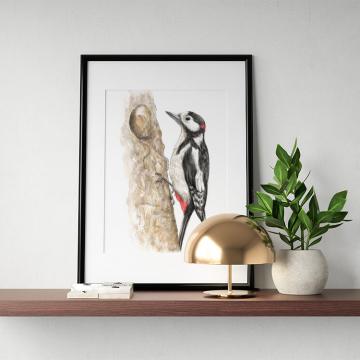 Great spotted woodpecker –original artwork